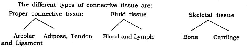 ncert-solutions-for-class-9-science-tissues-17