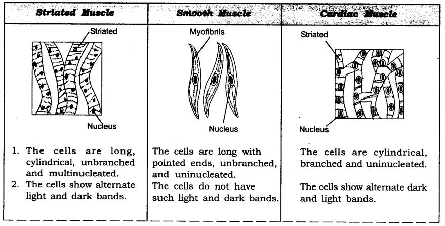 ncert-solutions-for-class-9-science-tissues-12