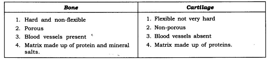 ncert-solutions-for-class-9-science-tissues-6
