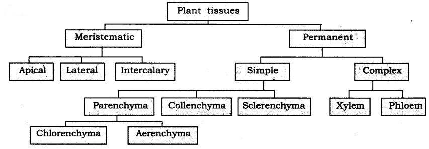 ncert-solutions-for-class-9-science-tissues-111