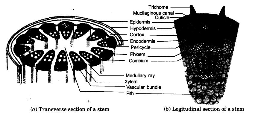 ncert-solutions-for-class-9-science-tissues-20