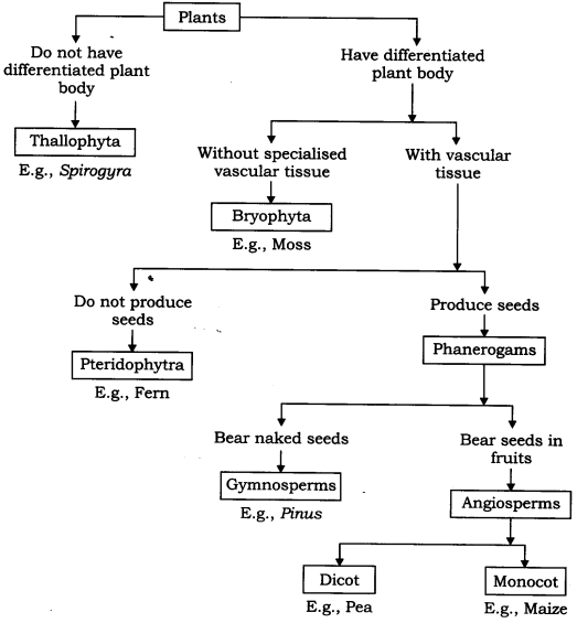 ncert-solutions-for-class-9-science-diversity-in-living-organisms-4