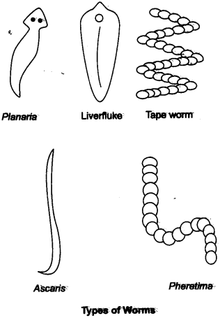 ncert-solutions-for-class-9-science-diversity-in-living-organisms-3