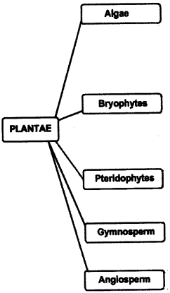 ncert-solutions-for-class-9-science-diversity-in-living-organisms-1