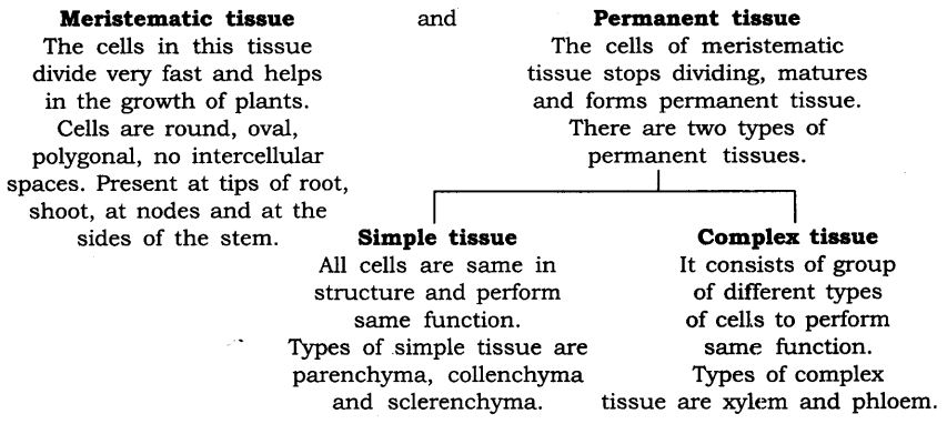 ncert-solutions-for-class-9-science-tissues-15