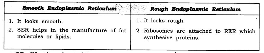 ncert-solutions-for-class-9-science-the-fundamental-unit-of-life-5